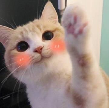 网红猫bobi卖萌表情图片下载|bobi小萌猫表情包全套