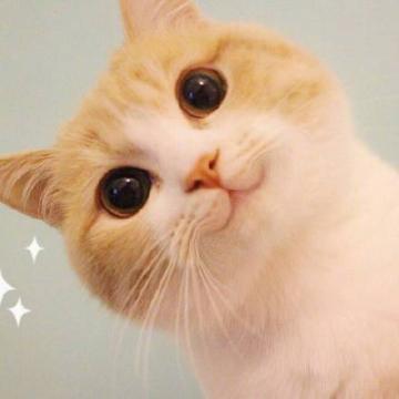 bobi小萌猫表情包全套图片